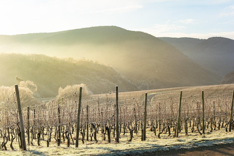 Winter im Weinberg - Leinwand