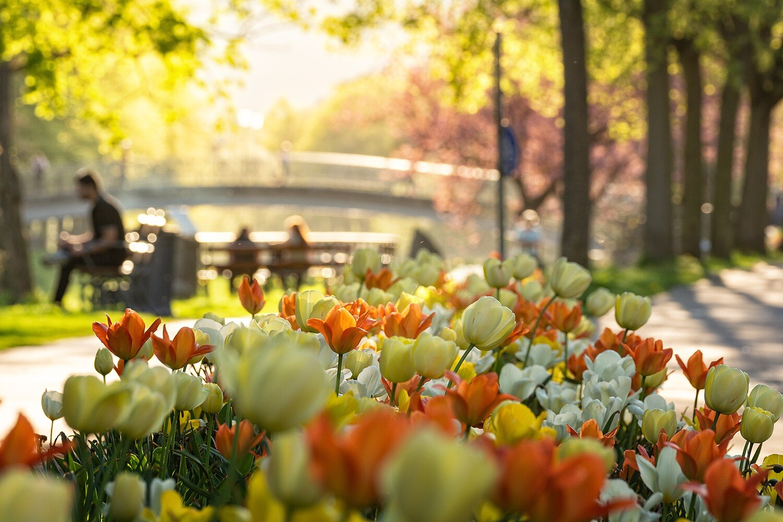 Frühling an der Ahr - Leinwand