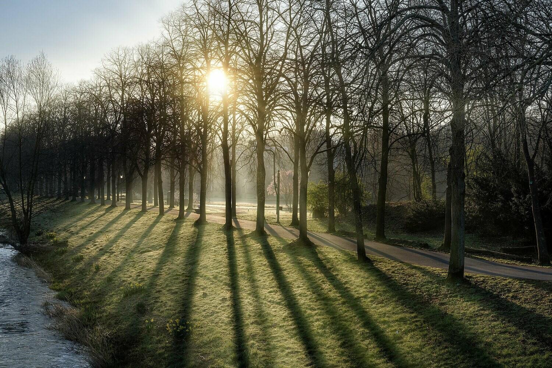 Morgendunst im Dahliengarten - Leinwand