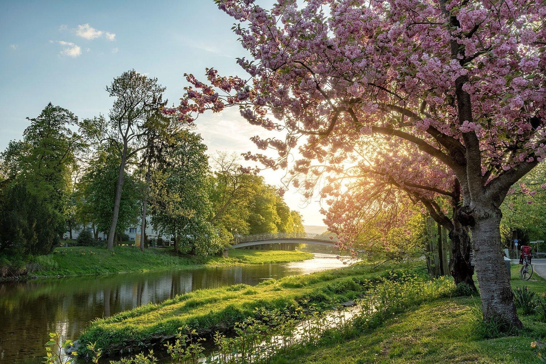 Frühlingsabend an der Ahr in Bad Neuenahr - Leinwand