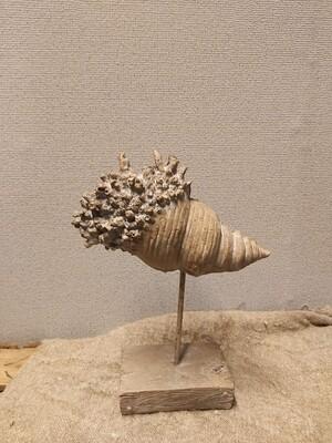 Schelp ornament