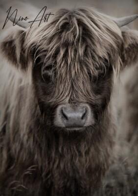 Tuinposter Schotse hooglander 2