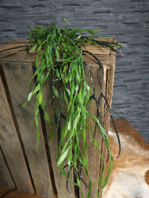 Asparagus spray kunst