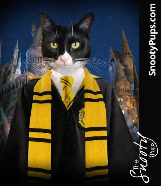 Custom Cat Portrait - Harry Potter