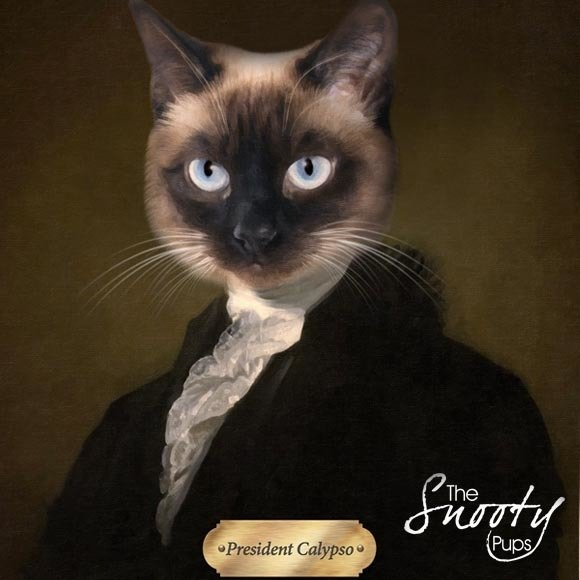 Cat Portrait President