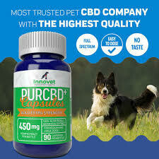 INNOVET PURCBD GOLD EXTRA STRENGTH MED & LARGE DOGS 450 MG 90 CAPSULES