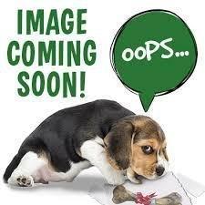 "Petstages Stuffing Free Play Stick Dog Toy 1"" x 5.5"" x 10.5"" - DOG - (B.A16)"