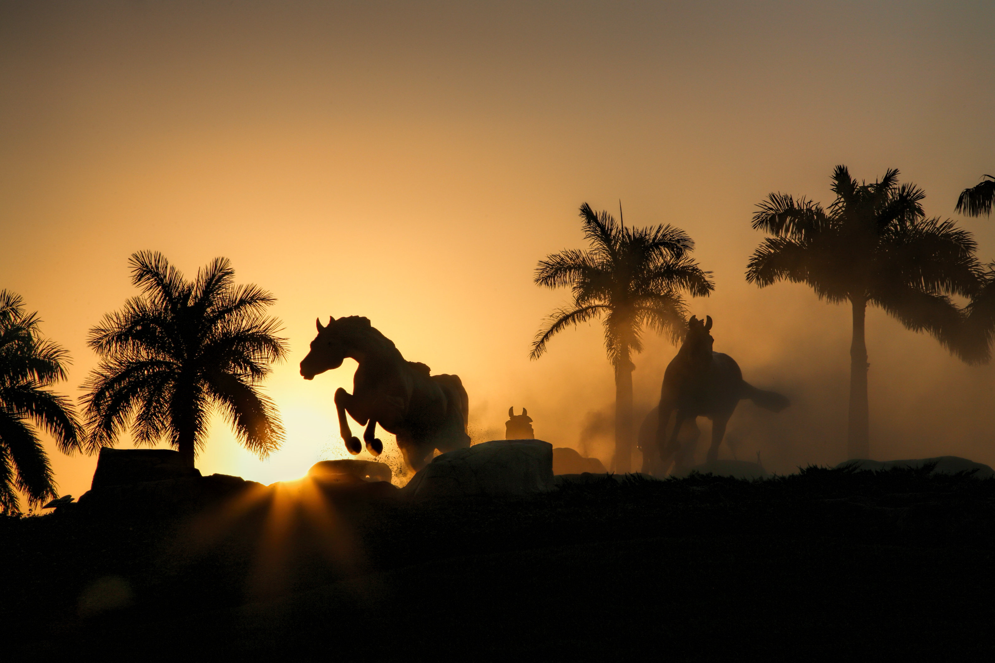 Colors of Naples - Lely Horses CON_004