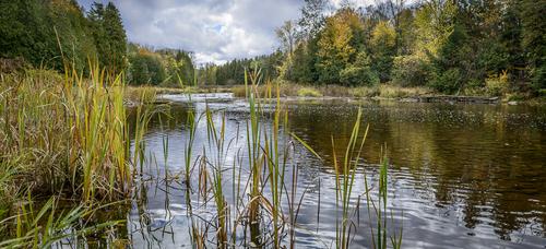 Sydenham River, Owen Sound, Ontario, Canada