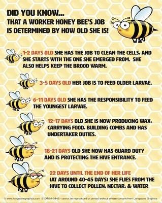 A Honeybee's Life Banner