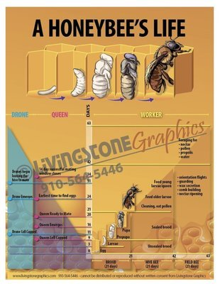 A Honeybee's Life Trade Show Banner