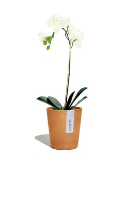 ECOPOTS Morinda orchid pot terracotta