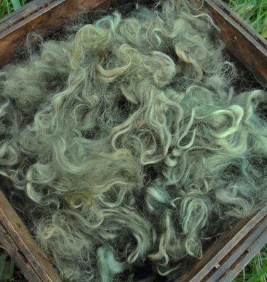 Hand-Dyed Suri Alpaca Fiber, 4 Inches, Olive