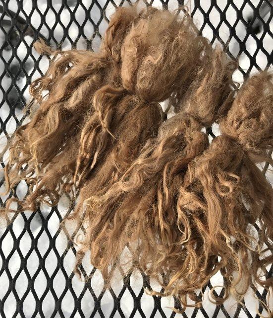 Suri Alpaca Locks, 8 Inches, Light Fawn, Abner