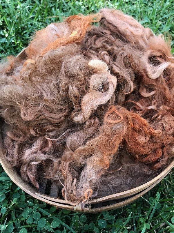Suri Alpaca Fiber, 6 Inches, Madder Orange, 2 Ounces