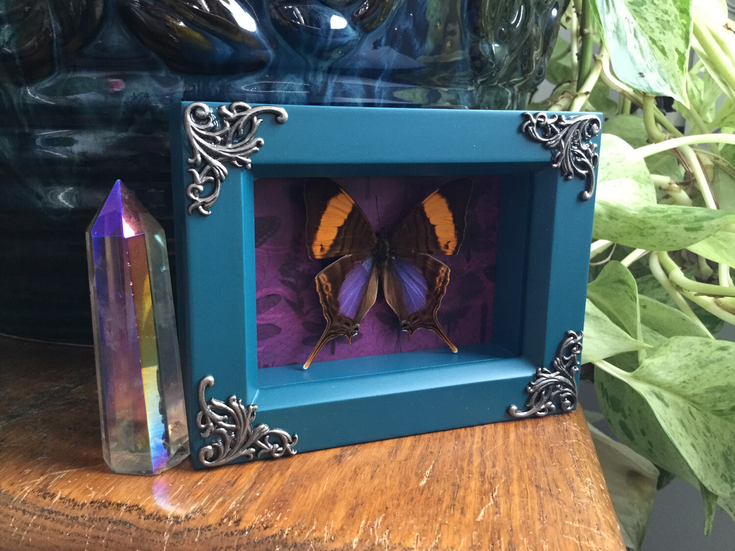 Framed Purple and Orange Butterfly