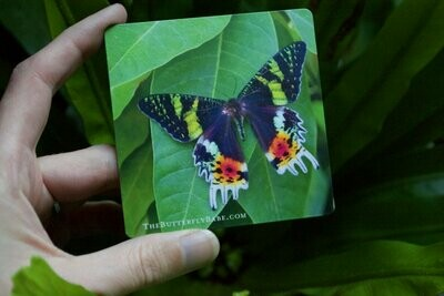 Sunset Moth Photography Magnet