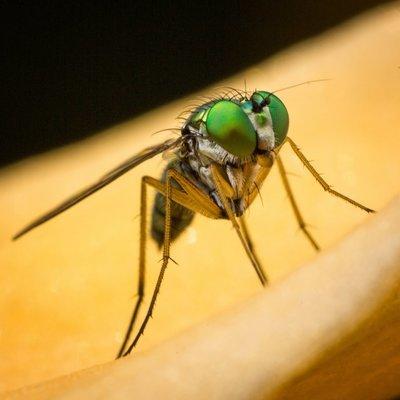 Long Legged Fly by Primewizard