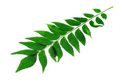 Organic Curry Leaves (With Stems)