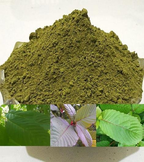 Pure 50X Green MD Extract Powder