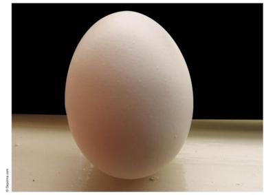 30 stk egg på brett