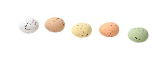 100 gram eitjes Mereleitjes