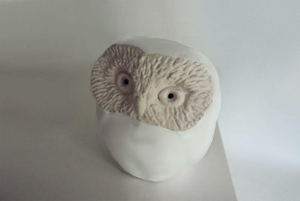Sawhet Owl, White