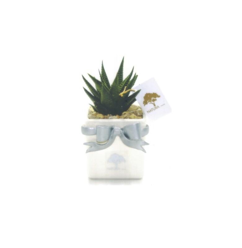 Vaso cubo fiocco piccolo con pianta haworthia Pz. 1