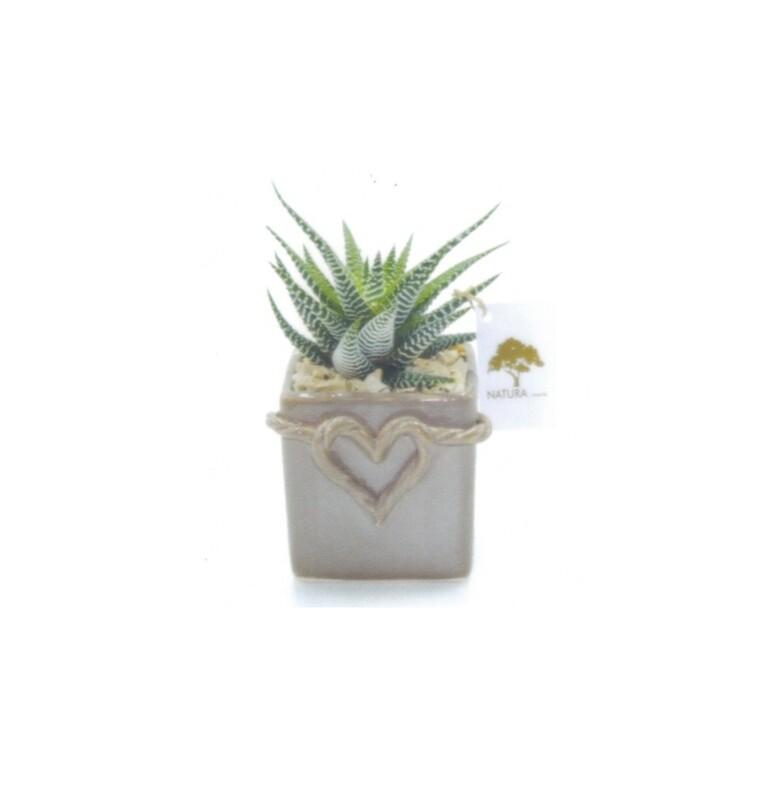 Vaso cubo piccolo cuore di corda con pianta haworthia zebrata Pz. 1