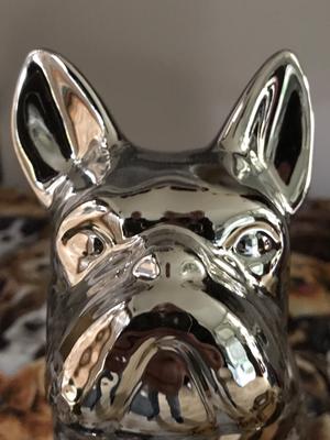 Silver bulldog