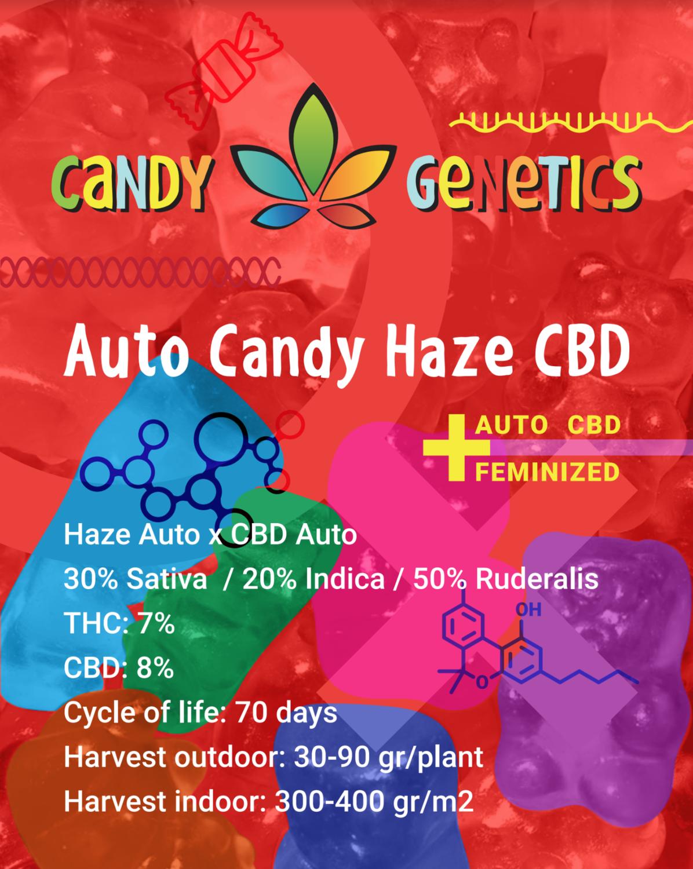AUTO CANDY HAZE CBD