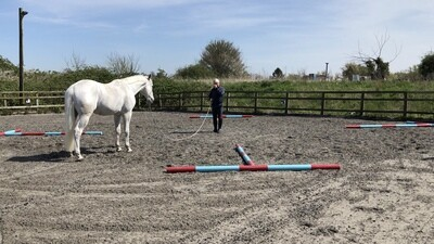 Selection of videos to help with suppleness, connection and dexterity  (Normal price £48 - COVD-19 price £25)