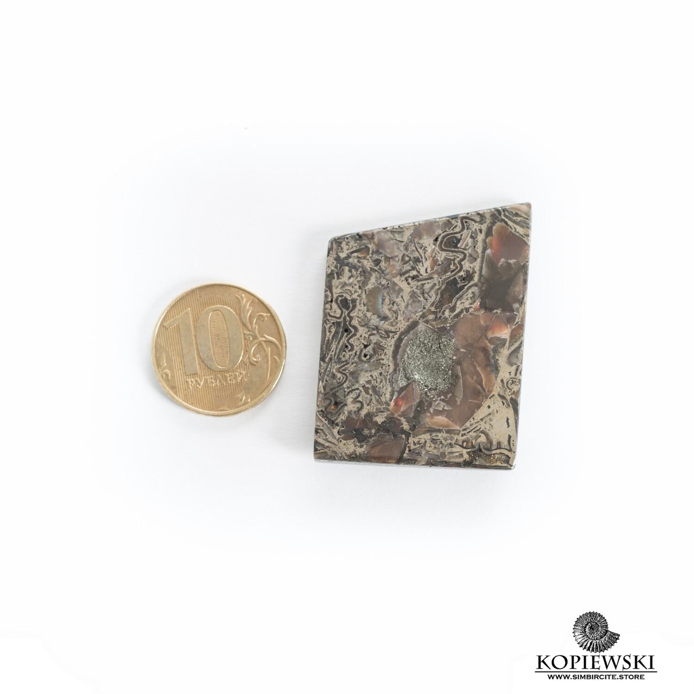 Ammonite Pyrite
