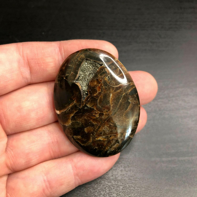Ammonite Simbircite