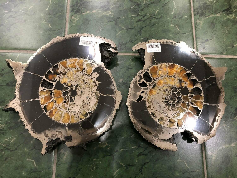 Pair Ammonite Slice Ø 26 CM - 820 $
