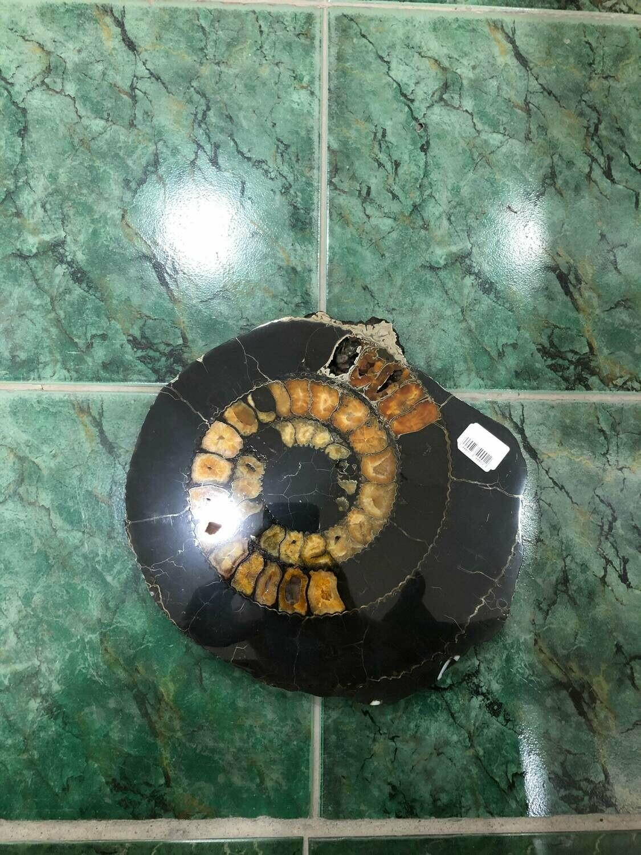 Ammonite Slice Ø 28 CM - 410 $