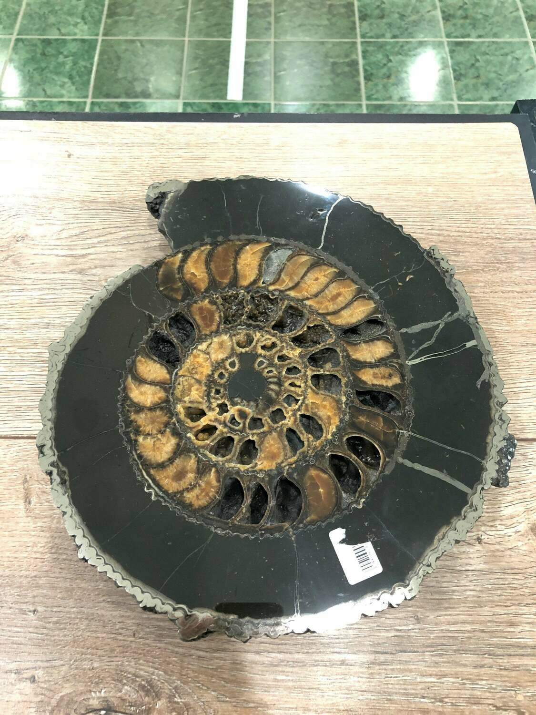 Ammonite Slice Ø 32 CM - 450 $