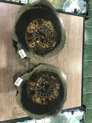 Ammonite Slice Ø 27 CM - 680 $