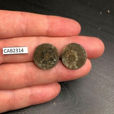 Ammonite (Pair Cabochons)