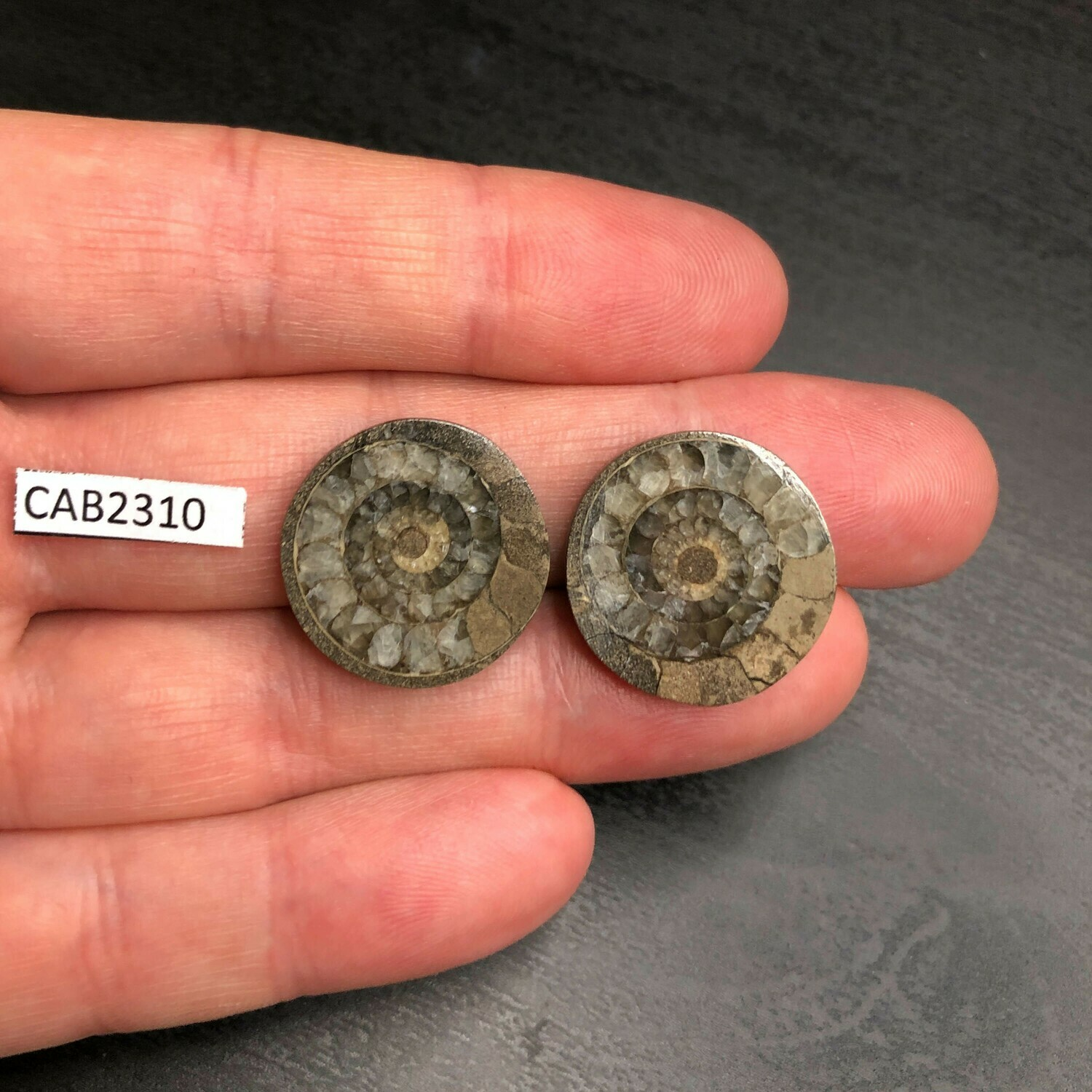 Ammonite (Pair Cabochons)