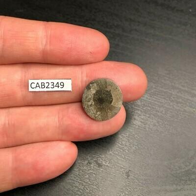 Ammonite Cabochon