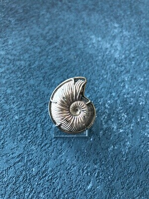 Ring witn Ammonite (Dimensionsloses)