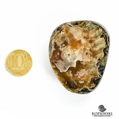 Аммонитовый симбирцит 55*50*20 мм