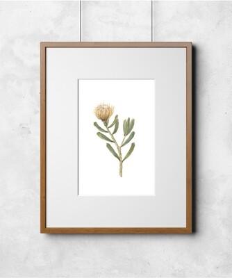 Fleur V Art Print