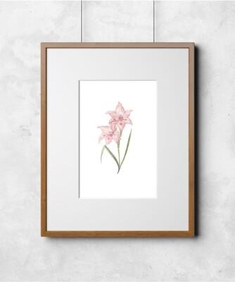 Fleur III Art Print