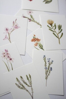 Botanical Illustration Notecard Set of 12