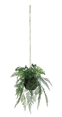 Hanging Fern df0922