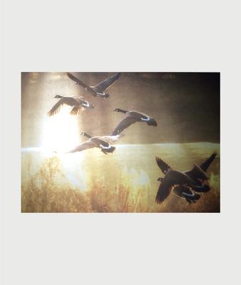 Billede i stål med canadagæs