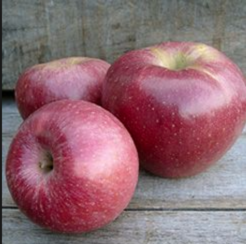 Staymans Winesap - bare rooted 74