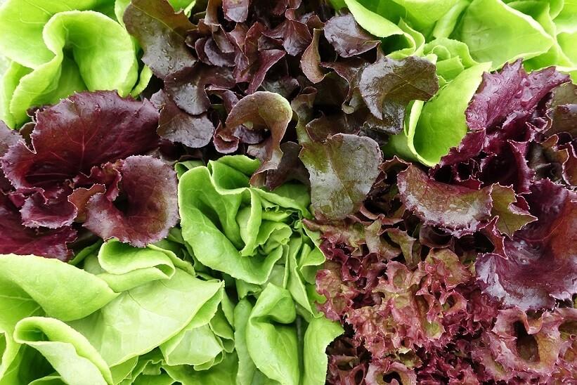 Lettuce Leaves (250g) اوراق خس مشكل